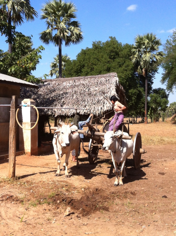 Myingyan Ox Cart1